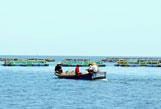 """南海渔民的""""新致富经"""""""