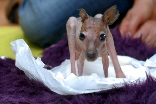 猛兽也有卖萌时光 盘点动物的可爱童年模样/图