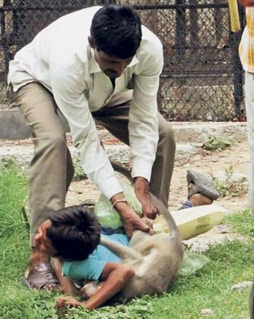 印度动物园猕猴发狂 追咬男孩不松口露牙示威/图