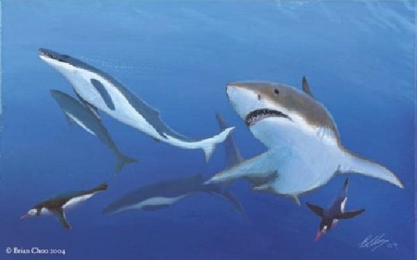 鲨鱼的祖先是什么动物