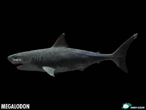巨齿鲨vs龙王鲸_龙王鲸vs巨齿鲨图片_巨齿鲨vs食人鱼图片_鹊桥吧
