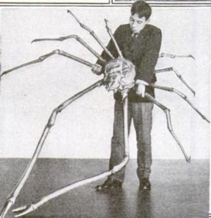 以整体尺寸计算,日本蜘蛛蟹-甘氏巨螯蟹是世界上最大的节肢动物.