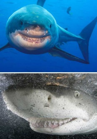 治愈系萌图!盘点动物咧嘴大笑的可爱表情(图)
