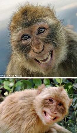 导入系萌图!v表情表情治愈咧嘴的可爱表情(图)大笑动物eif手机包图片