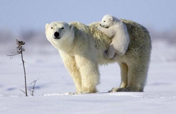 世界上最可爱的熊