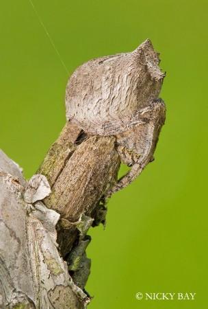 盘点世界罕见蜘蛛种类:身体结构精巧纤美/组图