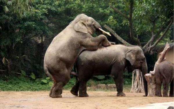 壁纸 大象 动物 犀牛 野生动物 600_376
