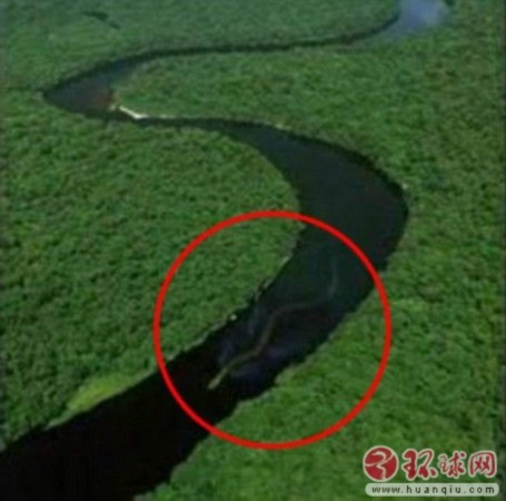 马来西亚神秘巨蛇nabau 长达百英尺
