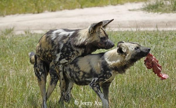 激情交配繁衍后代 揭秘动物世界性爱全程图