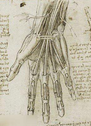 达芬奇珍贵人体素描手稿曝光