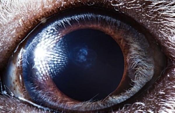 令人难以置信的各种动物眼睛特写镜头