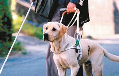 北京/导盲犬(资料图片)
