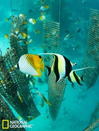 壁纸 动物 海底 海底世界 海洋馆 水族馆 鱼 鱼类 341_450 竖版 竖屏