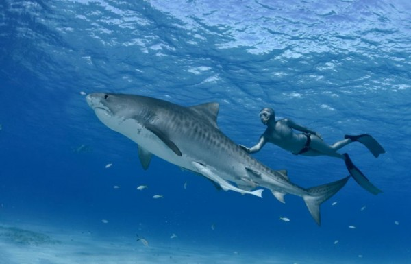 玩儿鲨鱼得女人图片