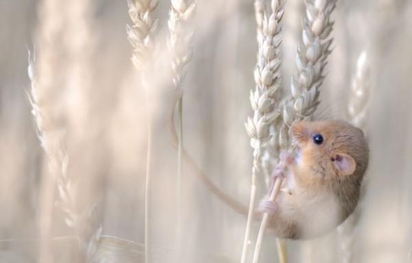 英2013野生动物摄影大赛作品展精妙大自然(图)