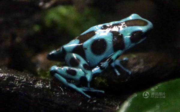 70余種珍稀動物落戶香港 巨型蟑螂身長7厘米