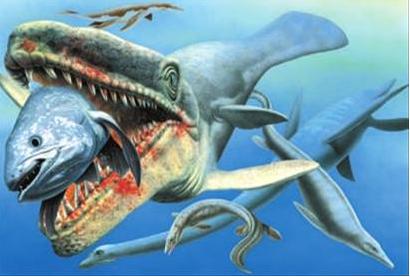 事实上,鲨鱼物种就属于现代的有颌类脊椎动物.