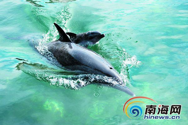 动物图片大海豚