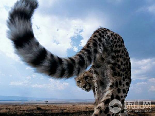 """新闻中心 国际新闻 科学探索     生命壮歌走进""""非洲动物大迁徙""""之路"""