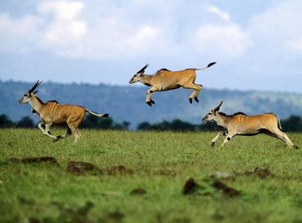 羚羊奔跑简笔画