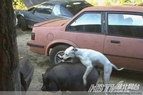 盘点动物发情后雷人事