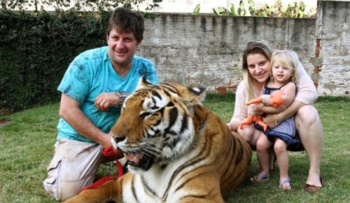 巴西土豪养老虎亮瞎双眼