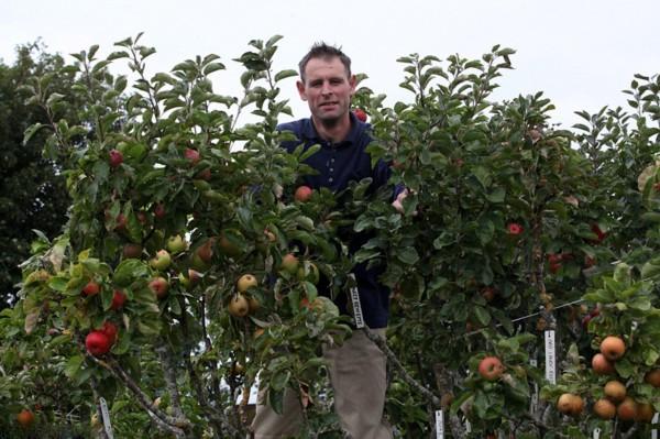 英國神奇果樹一棵結出250種蘋果(組圖)