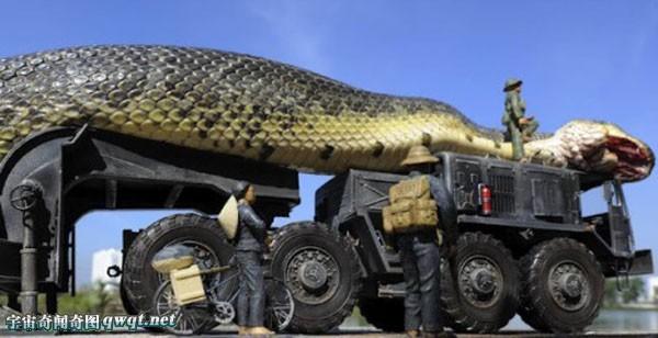 全世界最大的蟒蛇_物园抓获巨蟒蛇