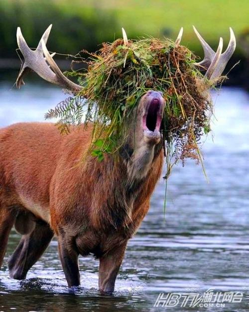 抓拍全球动物搞笑瞬间【组图】