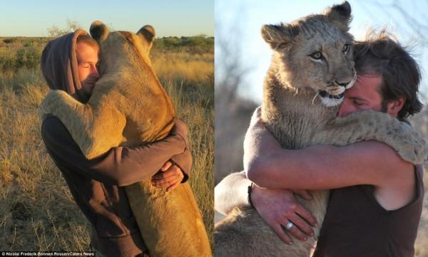 人狮情缘:非洲狮子与动物保护者亲密相拥