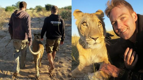 人狮动物:非洲情缘与恐龙保护者亲密相拥_恐龙_狮子_所有科技所有的财经个长什么样图片
