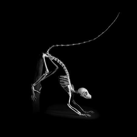 """脊椎动物骨骼黑白照演绎视觉版""""进化论""""/组图"""