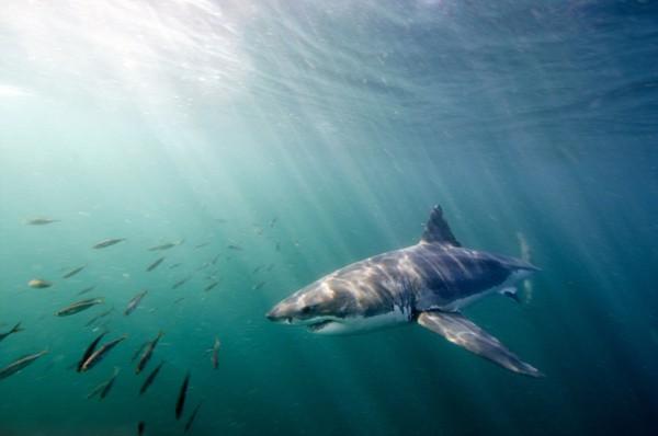 壁纸 动物 海洋动物 鱼 鱼类 桌面 600_398