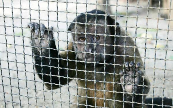 挤满动物的笼子