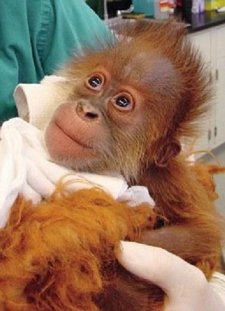 盘点全球濒临灭绝的稀有动物:禁不住爱上它们