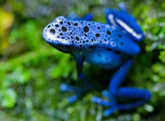 十种难得一见的奇特蓝色动物