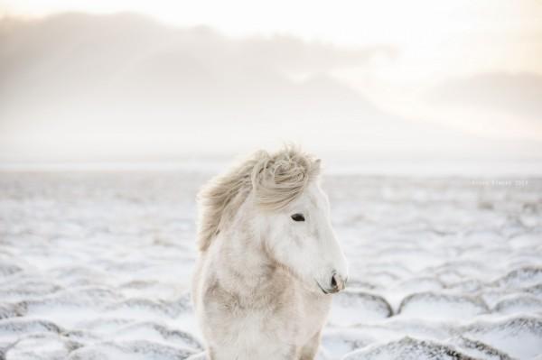南海网 新闻中心 国际新闻 科学探索     动物摄影:马语者   来源