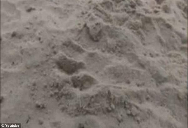 美国德州拍到吸血怪兽踪迹 长尖耳斑点皮肤