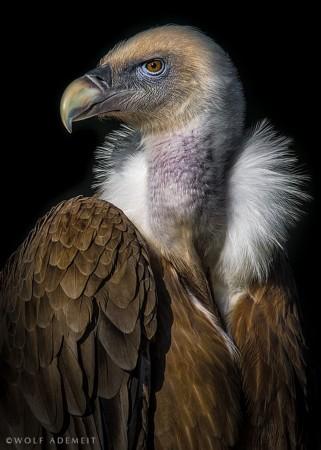 撼动人心的动物肖像 德国摄影师动物作品