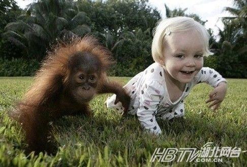 动物 四川/哈士奇模仿婴儿爬行盘点动物搞笑瞬间(组图)