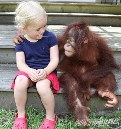 可爱 动物 搞笑 瞬间/哈士奇模仿婴儿爬行盘点动物搞笑瞬间(组图)