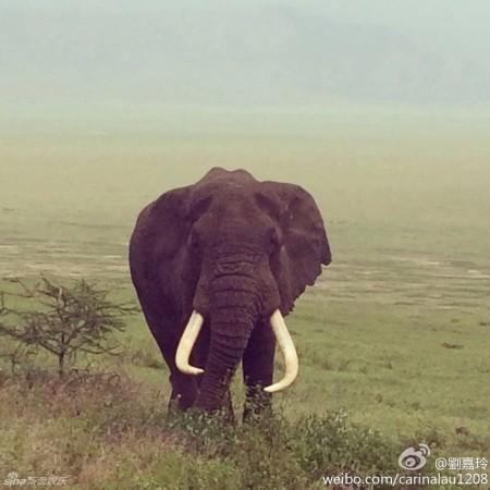 组图:刘嘉玲游非洲野生动物园 不惧猛兽胆量大