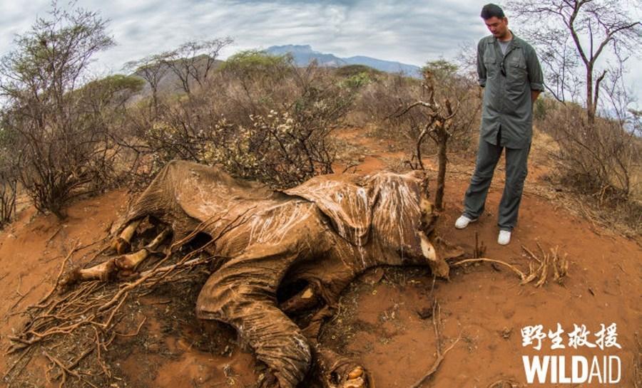 致力于保护野生动物的姚明,为被偷猎的大象伤心