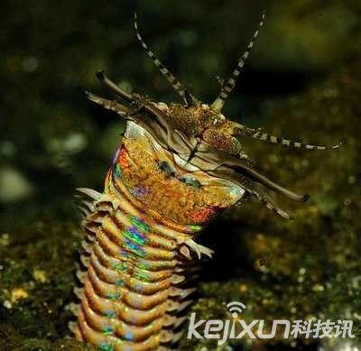 海底三米怪虫能将猎物瞬间撕两半