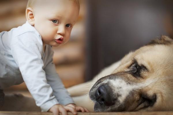 这些照片中孩子和小动物的有爱互动,再配上唯美的田园风光,仿佛带人进