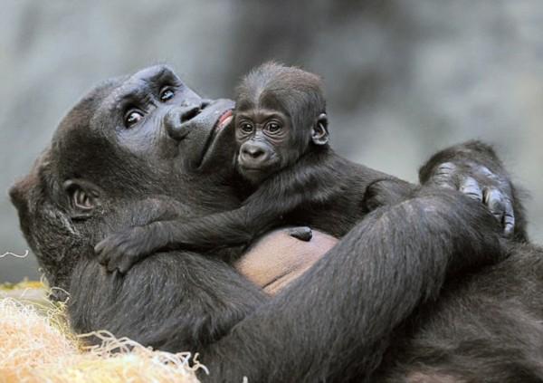 美网友历时4个月为可爱小猩猩起名(组图)