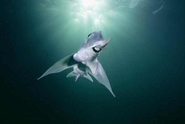 盘点18种相貌奇特的动物:自体发光深海银斧鱼