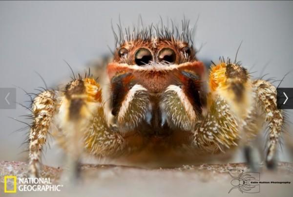 动物界的胡子君:皇狨猴花白胡须似老爷爷/组图