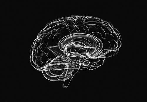 欧美科学家联手试图破译人体控制中心