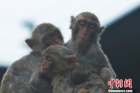 群挤在一起坐着睡觉李木生摄-深圳动物园动物睡姿有创意